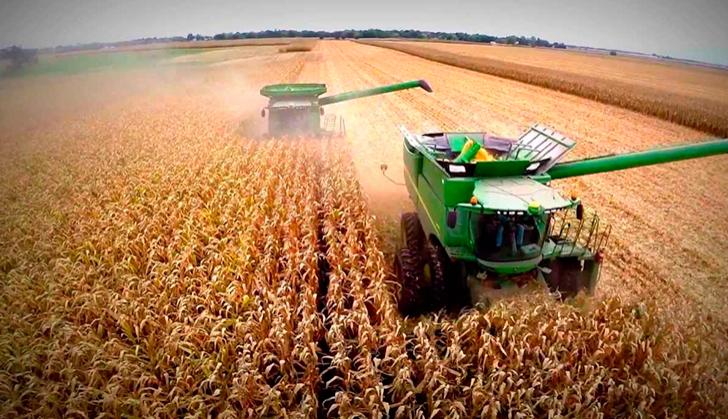 Máquinas sojeras en pleno proceso de cosecha.