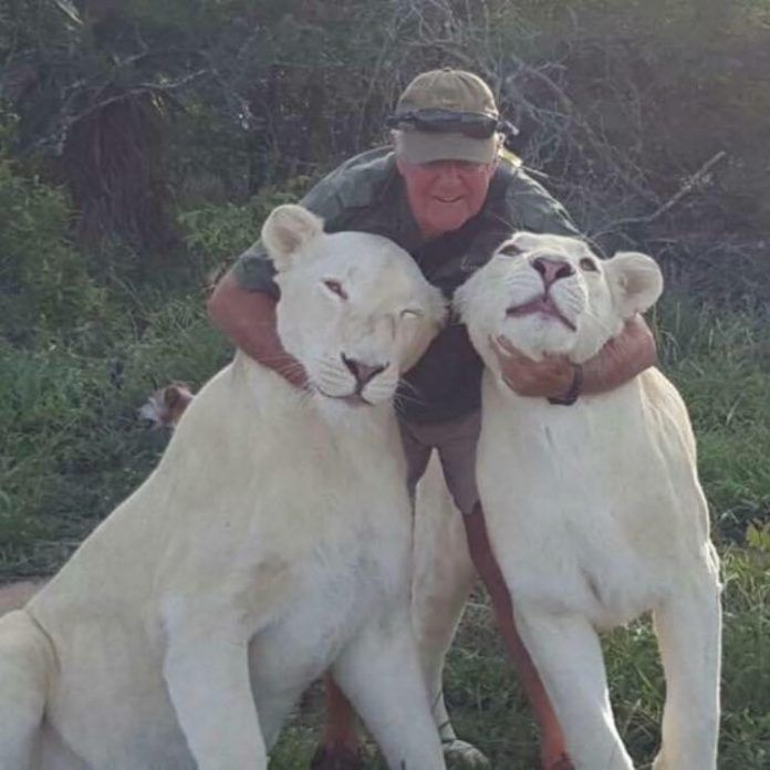 http://www.lavozdigital.com.py//assets/West-Mathewson-his-killer-pet-lions.jpeg