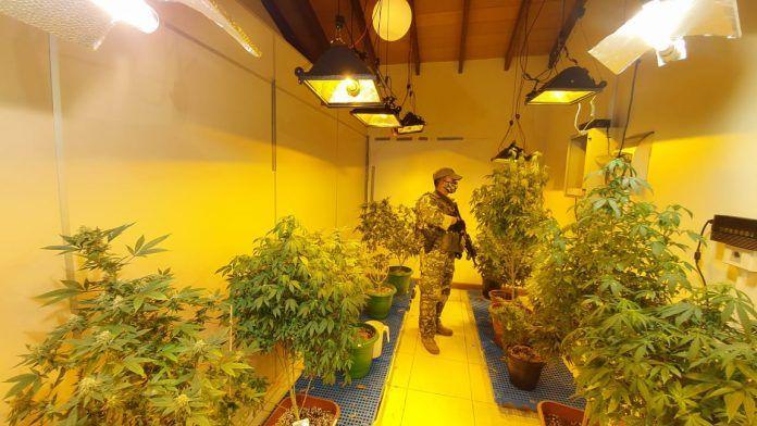 http://www.lavozdigital.com.py//assets/marihuana%20vip.jpg